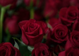 how to manage your valentine's day expectations - Moorgate Andrology
